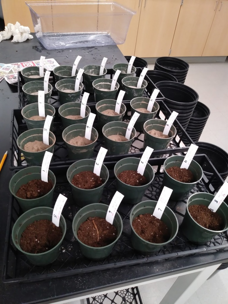 Twenty-four small green pots with white labels sticking out of their tops, all are placed in black crates