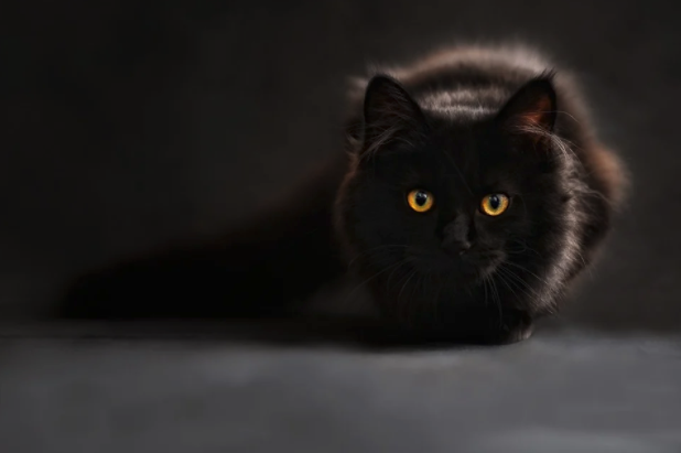 A black cat sits on a black table with a black background. The cat's bright yellow eyes are visible.